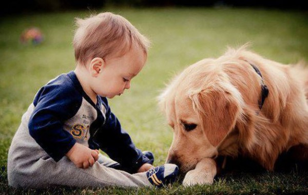 Introduce Them with Care | How To Introduce A Pet To Your Baby |keshdigital
