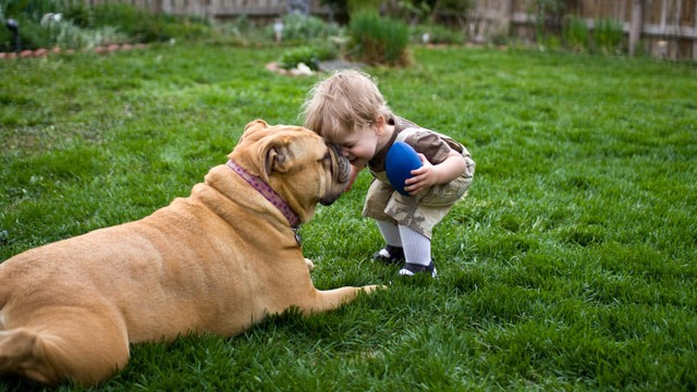 Take Your Pet to a Vet | How To Introduce A Pet To Your Baby | keshdigital
