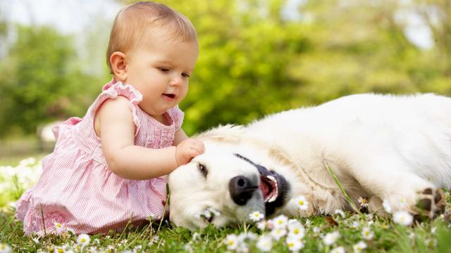 How To Introduce A Pet To Your Baby | keshdigital