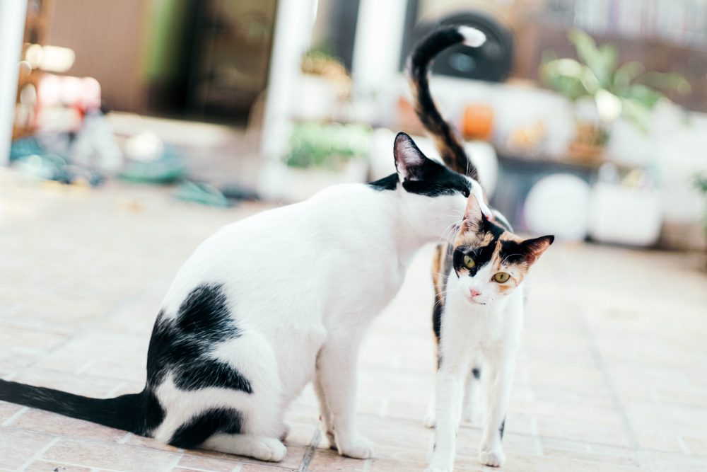 2. Commitment | What You Need To Consider Before Getting A Cat | the spruce pets spruce pet hospital spruce pets dog training spruce pet hospital south san francisco