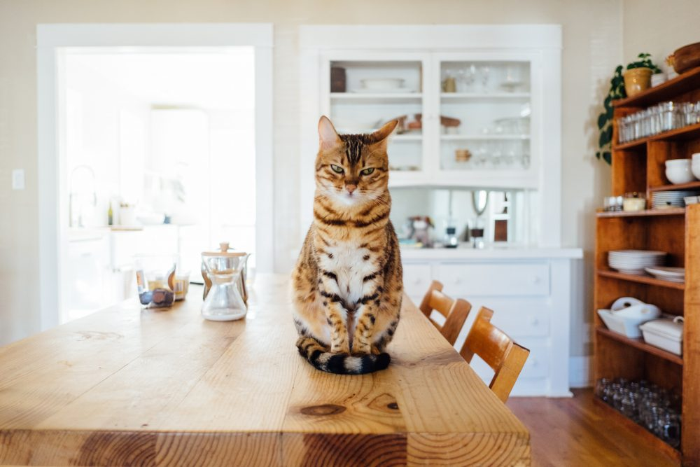 5. Kitty Litter | What You Need To Consider Before Getting A Cat | the spruce pets spruce pet hospital spruce pets dog training spruce pet hospital south san francisco