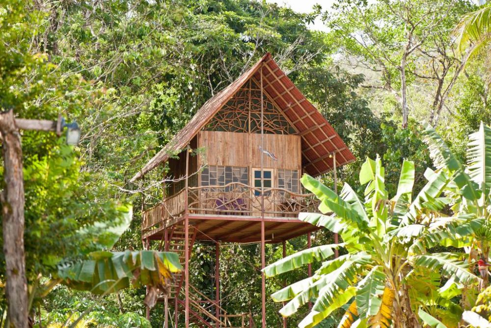 Atlanta Alpaca Treehouse in the Bamboo Forest   8 Luxury Airbnb Tree Houses You Can Actually Stay In   Tree Houses houses for rent houses for rent near me apartments for rent Tree Houses You Can Actually Rent on Airbnb - YouTube 32 Amazing Treehouses You Can Rent in 2020 - Best