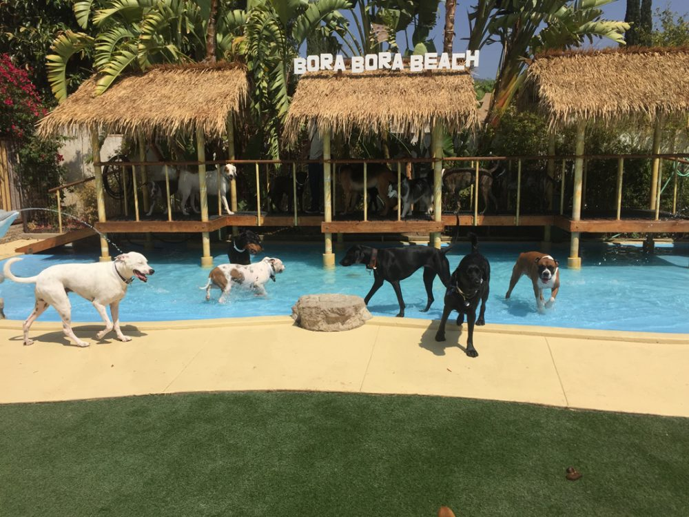 Actuel Dogs (Paris) | 10 Most Indulgent Pet Spas In The World | Life360 Tips