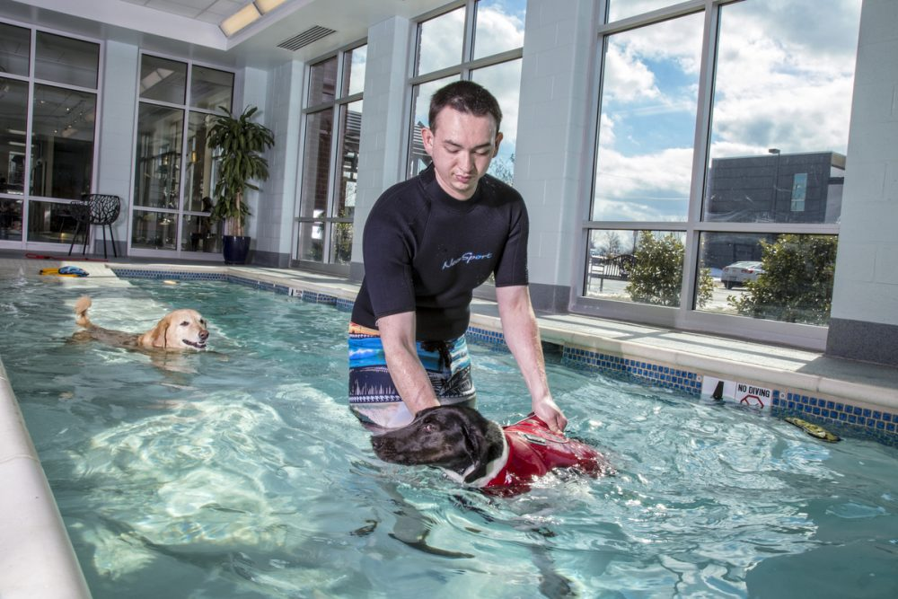 10 Most Indulgent Pet Spas In The World #2 | Life360 Tips