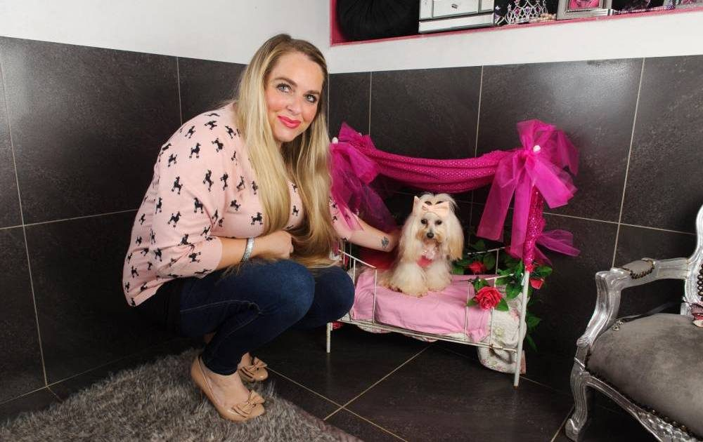 D Pet Hotel (New York City) | 10 Most Indulgent Pet Spas In The World | Life360 Tips