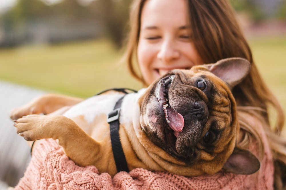 7 Dog Breeds That Need The Least Attention | Dog Breeds - Types Of Dogs - American Kennel Club Dog Breeds - Information & Pictures of All Types of Dogs