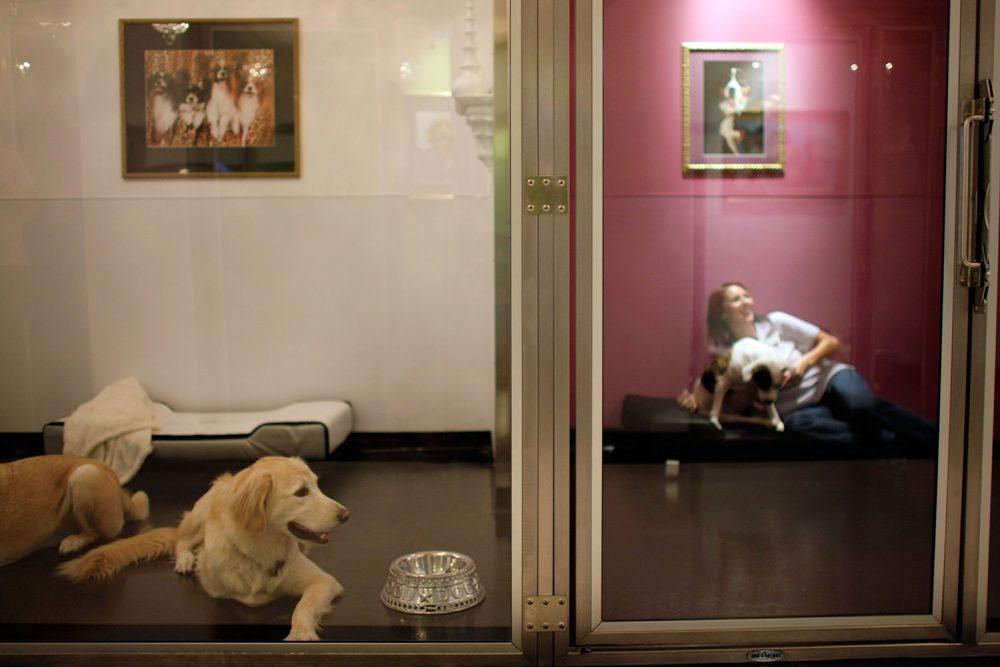 The Vet Lounge (Coomera, Australia) | 10 Most Indulgent Pet Spas In The World | Life360 Tips