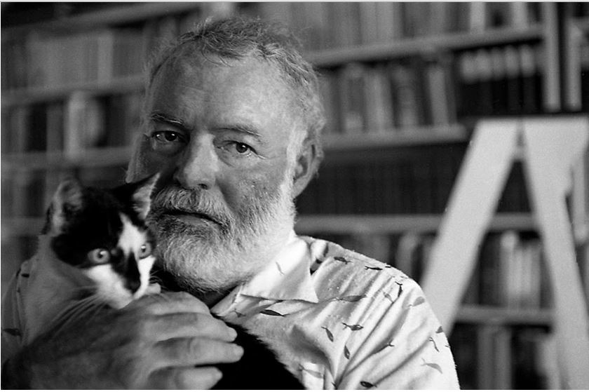 Snowball, the cat who owned Ernest Hemingway | Life 360 Tips