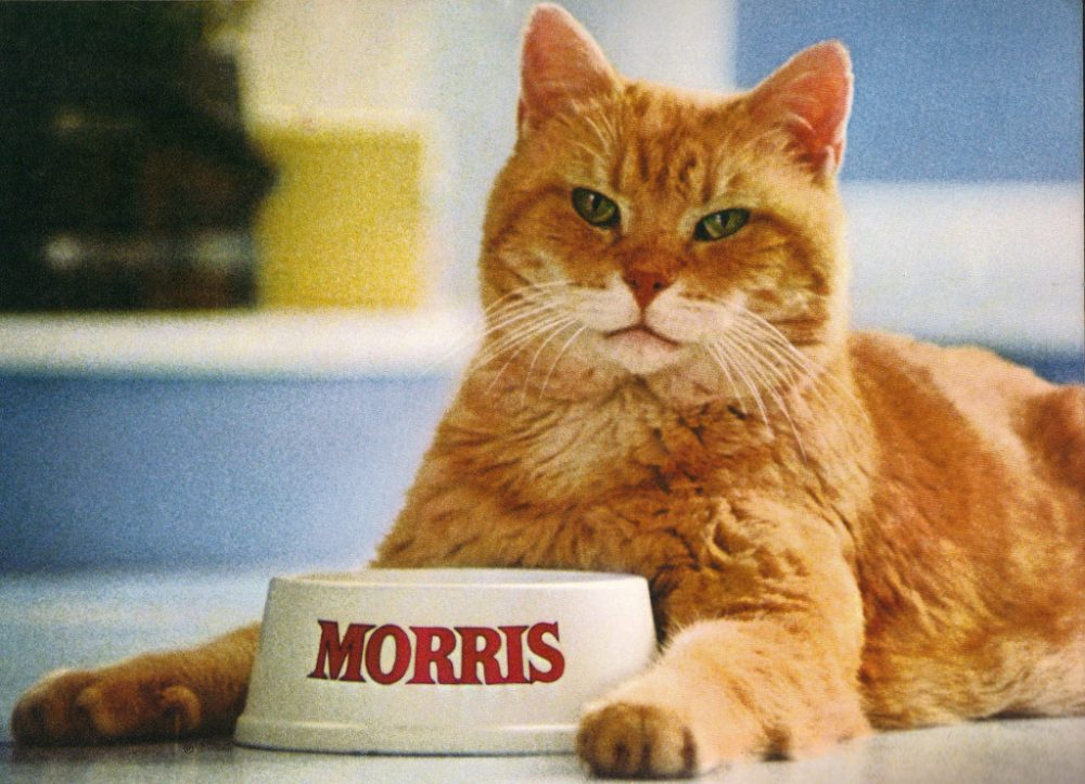 Morris, the cat who owned 9Lives Cat Food | Life 360 Tips