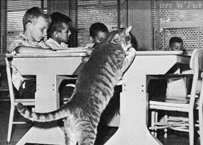 Room 8, the cat who went to school | Life 360 Tips