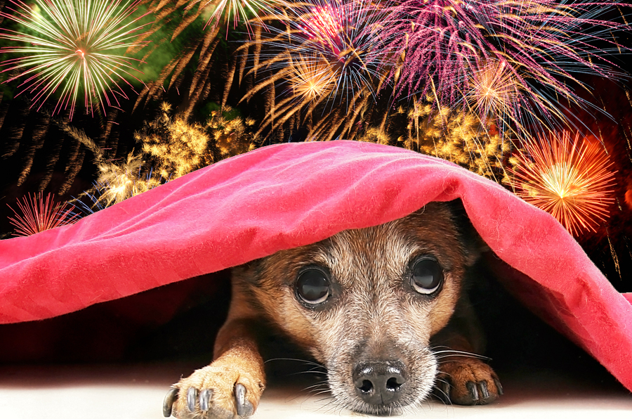 10 Pet Safety Tips For The Fourth Of July | Life360 Tips