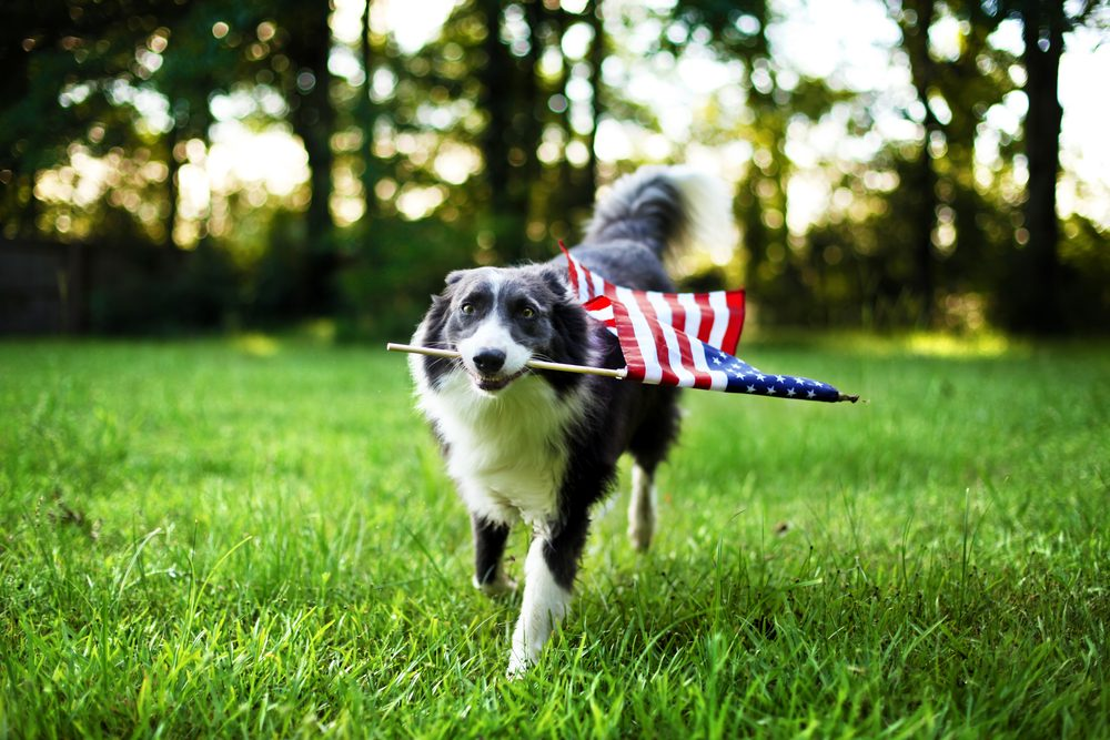 Wear pets out before fireworks start | Life360 Tips